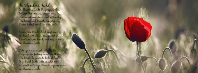 poppy_flower-851x315